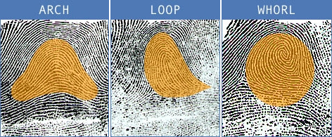 fingerprint3.png